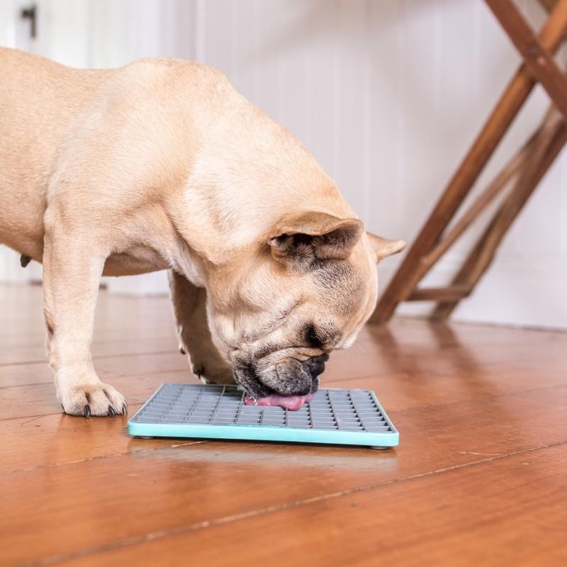 lickimat tapis de lechage occupation chien chiot chat stimulation education canine positive