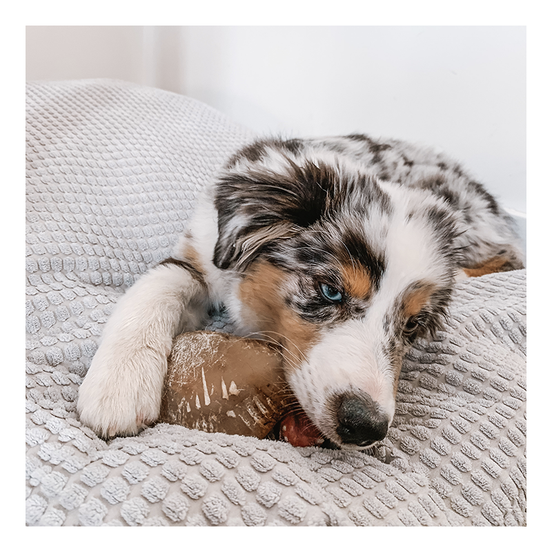 sabot de veau friandise de mastication 100% naturelle a mâcher pour chien