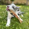 tendon a macher friandise naturelle pour chien chiot education canine positive mastication dent