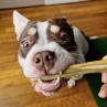 Peau de lapin friandise de mastication 100% naturelle pour chien