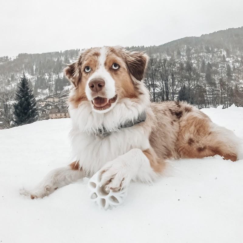 Balle phosphorescente pour chien d'occupation JW