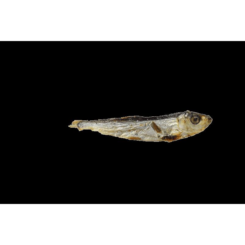 friandise 100% naturelle recompense chien poisson eperlan sprat séché