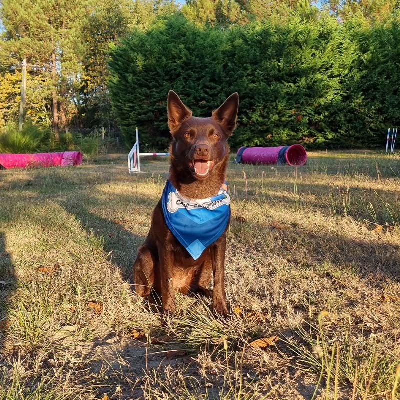 bandana sport canin chien chiot agility canicross caniVTT frisbee