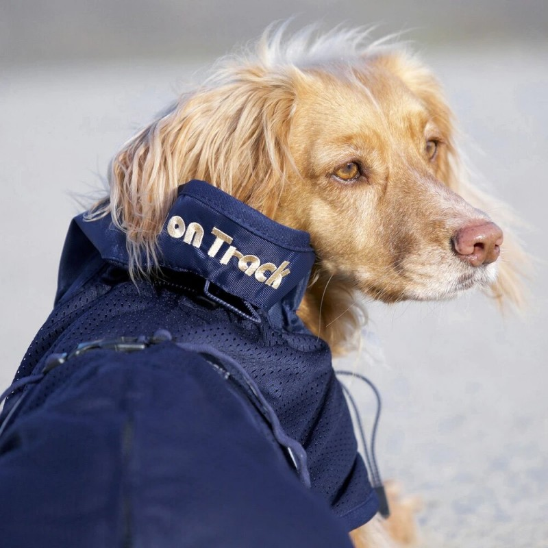 manteau filet back on  track pour chien manteau de recuparation sport canin