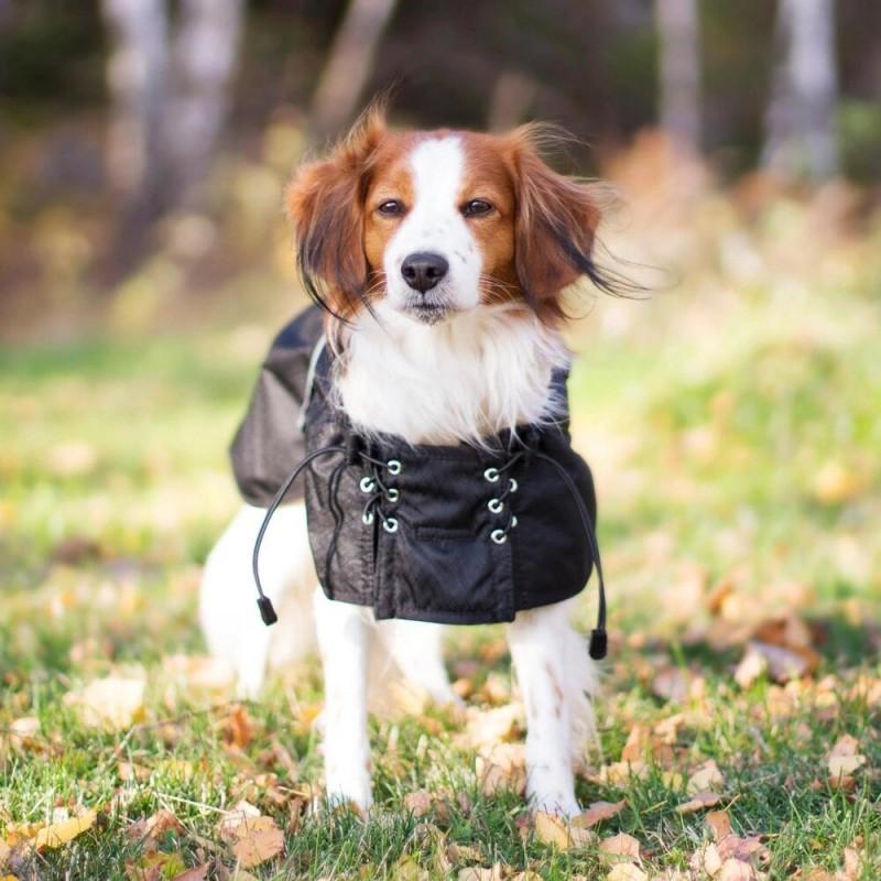 manteau impermeable matelasse pour chien back on track de recuperation physique chien de sport canin