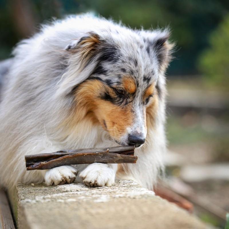 peau de cerf a macher friandise naturelle pour chien
